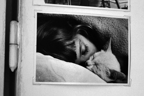 cat's-hug