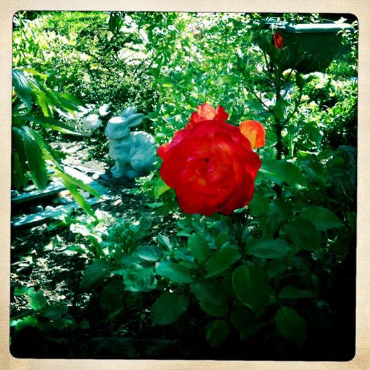 jardin-deauville